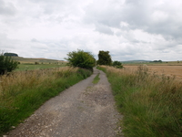 Roundway Down image 5
