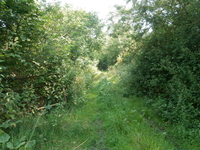 Thornborough image 4